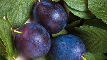 Post thumb plums
