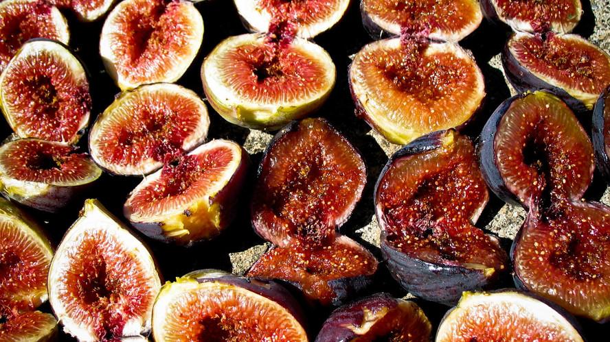 Md figs